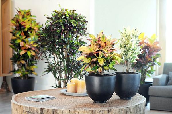 Как выбрать растение для своего дома