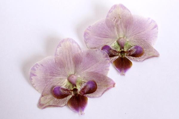 Как засушить цветы орхидеи