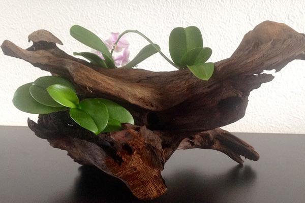 детки орхидеи фото