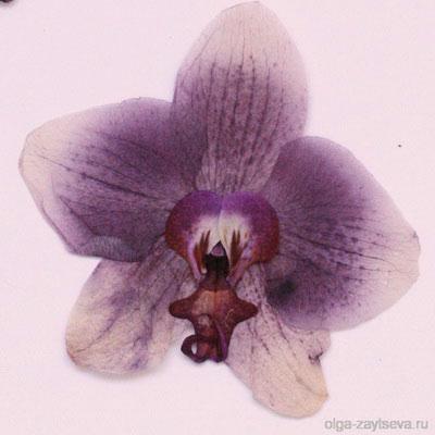 Что делать, если у орхидеи вянут цветы