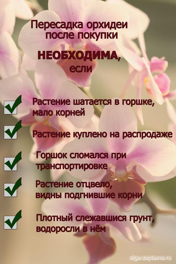 Пересадка орхидеи после покупки