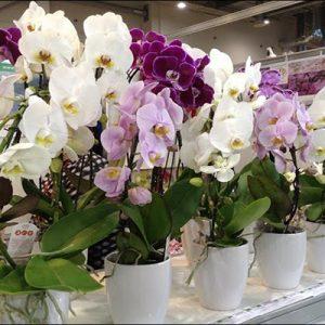 Покупка орхидей