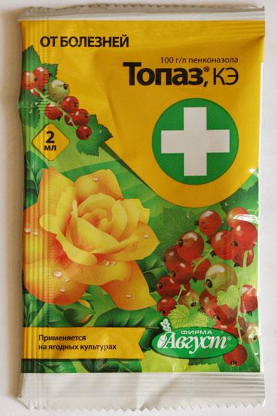 Лечение мучнистой росы на комнатных цветах