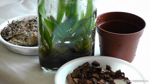 Как посадить орхидеи из бутылки