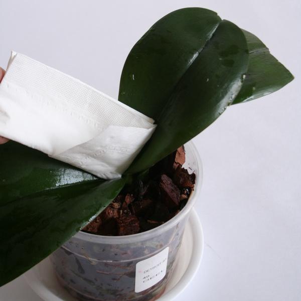 полив орхидей