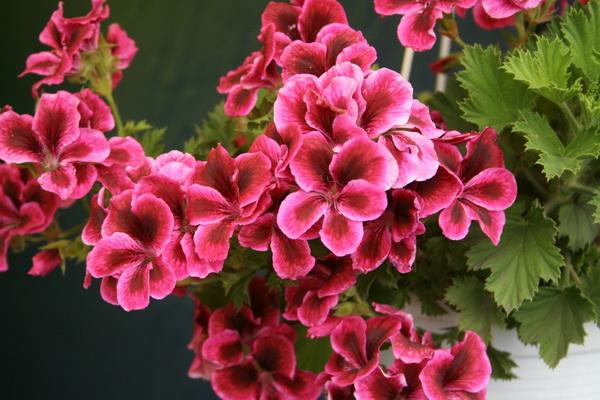 Подкормка цветов по всем правилам