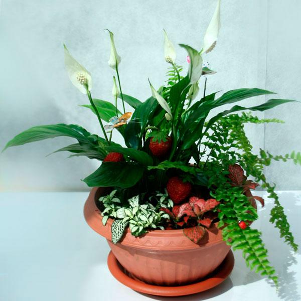 цветок женское счастье! (1)