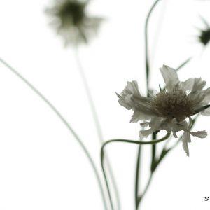 Лёд и Цветы (12)