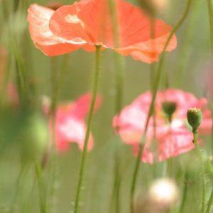 Лёд и Цветы (4)