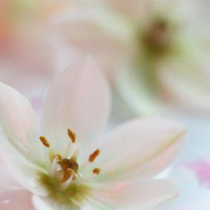 Лёд и Цветы (8)