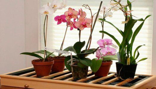 Просыхание коры в горшках с орхидеей