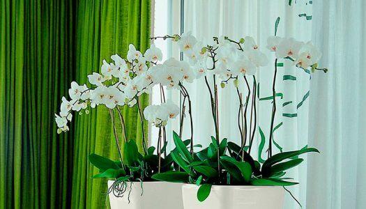 уход за орхидеями. повышение влажности воздуха