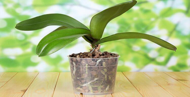 субстрат для орхидей. подготовка к посадке