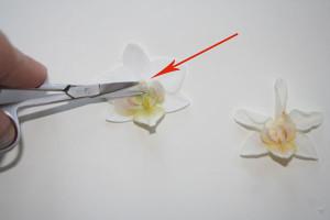плоскостное засушивание цветов (1)