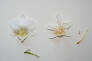 плоскостное засушивание цветов (2)