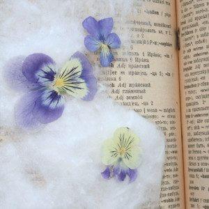 плоскостное засушивание цветов